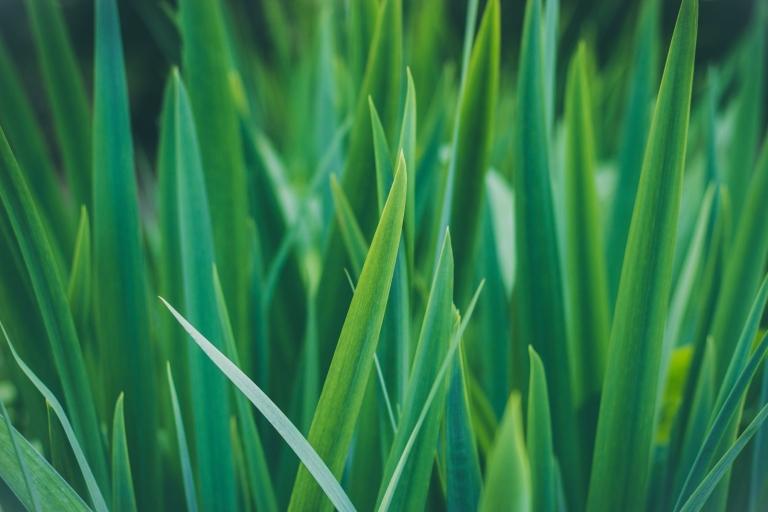 Grass-min.jpg