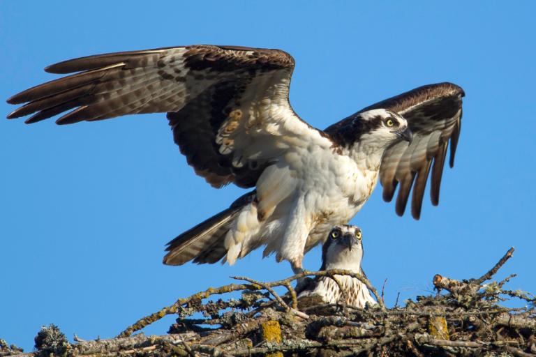 Avian Nest Surveys Crucial Qs header (1)