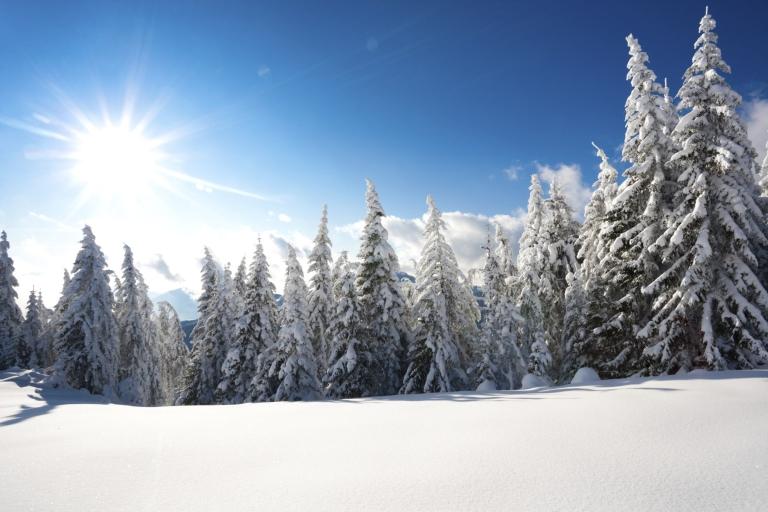 winter-pine-forest-logo-min.jpg